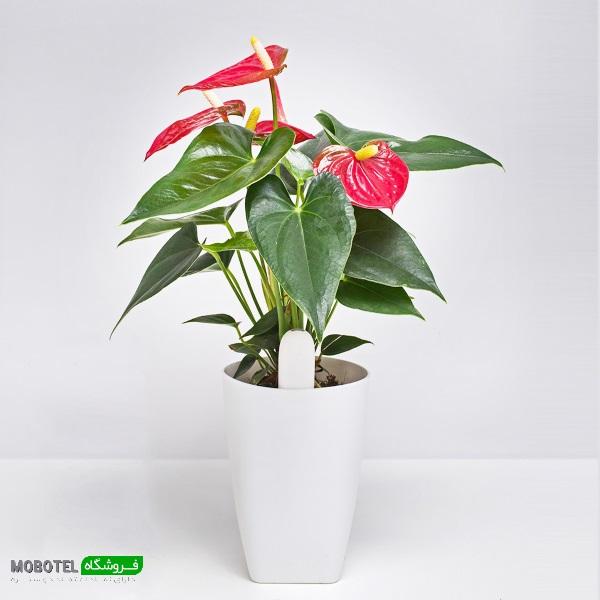 مشخصات، قیمت و خرید سنسور نظارت بر گل و گیاه شیائومی - Xiaomi Mi Plants Monitor Flower Plants Tester